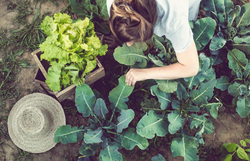 A person working in a home vegetable garden