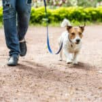 dog and owner walking through the park
