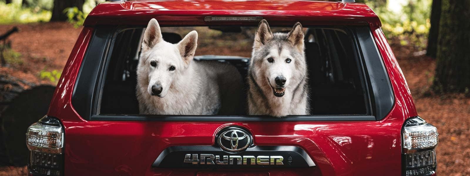 Buy new 2021 Toyota 4Runner in Stanleytown Virginia